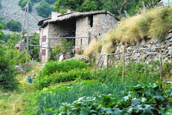 Habitation et jardin