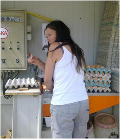Pré-tri des œufs